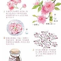 【手绘食谱】盐渍樱花 手造的暖意 任何工业化商品都比不过的做法图解5