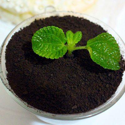 盆栽木糖蛋糕