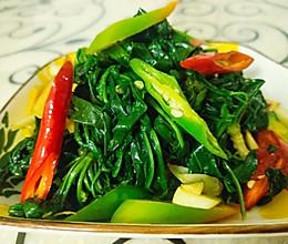 辣椒炒苦菜的做法