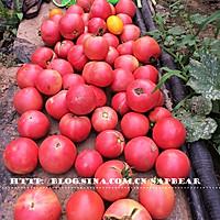 西红柿茄丁面 --- 有型有色快手面的做法图解1