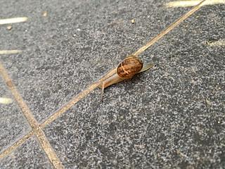 喵呜的糖果小屋的行走的蜗牛🐮