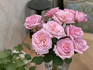 毛利小小兰的推荐5种适合家里养的香花,香气非常好闻哦😍