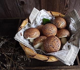 chihiro婷的超级可爱蘑菇馒头