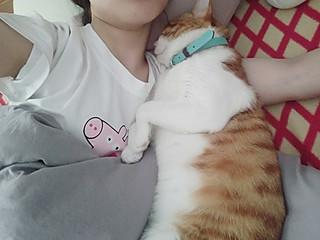 曦曦^O^的我有一只大懒猫|我家猫咪各种奇葩睡姿🙈☺💕