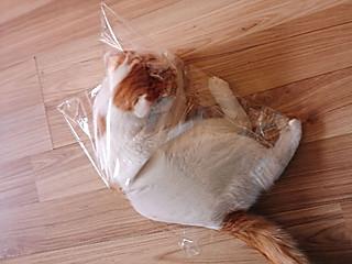 小傅马爷的见着塑料袋就要钻进去