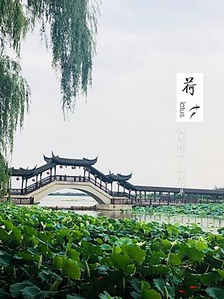 刘三姐_Kori的锦溪行|只为满塘荷🍃