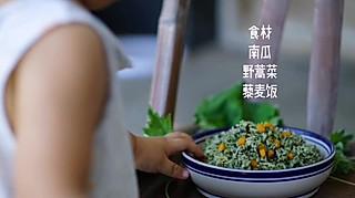 清晨曳雨的野茼蒿南瓜饭健康又美味