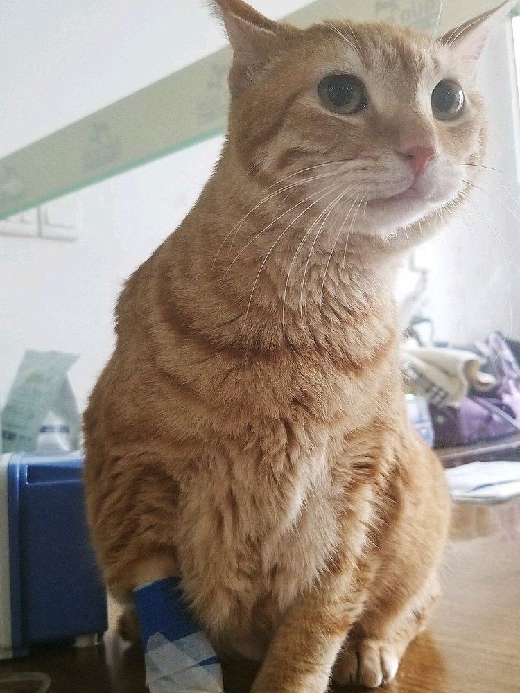 橘猫大厨恢复中图2