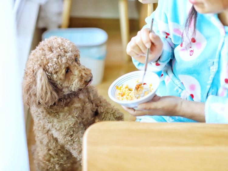 喵の早餐   有哪些用米饭做的好吃料理?第六款番茄炖饭窝蛋图9