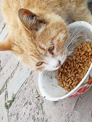 食光印记的猫呜