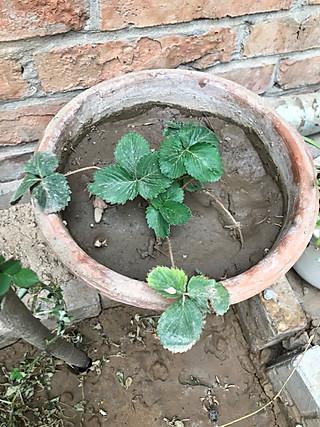 路人忆的小确幸~小花园之成长记