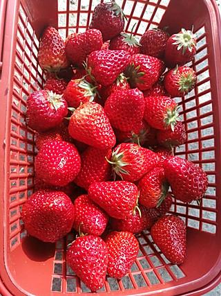 路过西厢恋上麦斯威尔的摘草莓去了