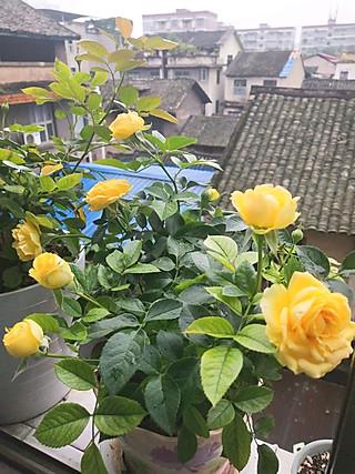 绿pegk的我家的阳台
