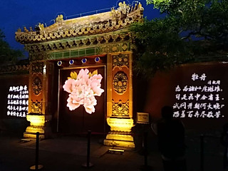 小小庆回国的夜赏牡丹