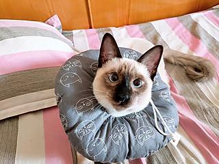 我的宝贝小猫咪——COCO