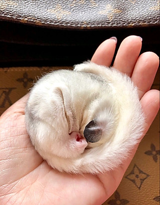 人没猫简单的最后一张有惊喜😉一脸萌