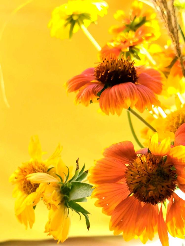秋日飘窗前的色彩🌻图3