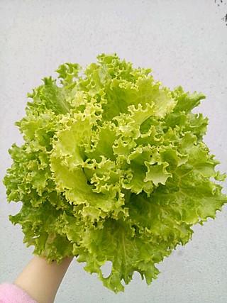 冬日的向日葵的第一次学种菜,完全生态菜