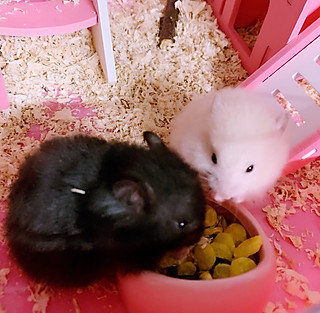 多多love美食的最喜欢看着姐妹俩一起嗑瓜子的样子,好可爱!