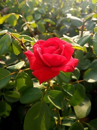 豆粉14732163的清晨竞相开放的鲜花💐