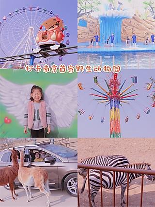 Rachel带你吃的打卡南京首家野生动物园,喂食玩乐适合全家游玩的好地方