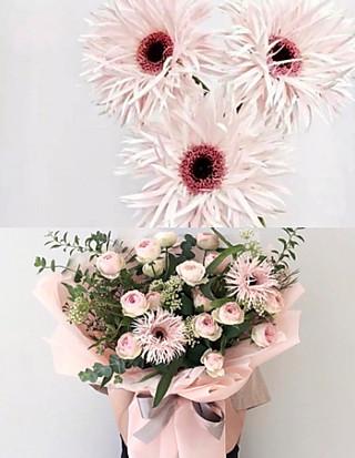 sweetness棠的安利10种秋季花材,让你的家美美美!每一款都有独特的秋韵~
