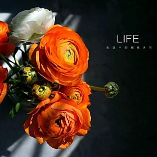 有花和甜品相伴的日子