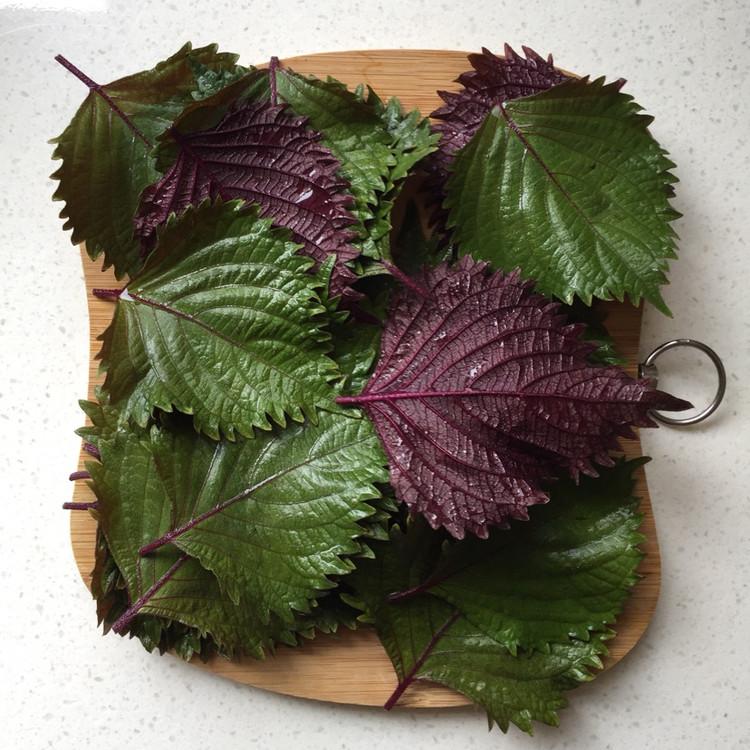 秋季养生吃紫苏,好处多多!图4