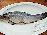 清蒸桂鱼的做法图解2