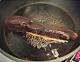 日式照烧茄瓜的做法图解7