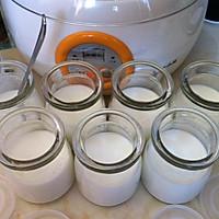 自制酸奶的做法图解5