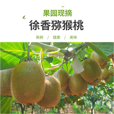 眉縣徐香獼猴桃綠心奇異果5斤 約30粒 60-80g/個